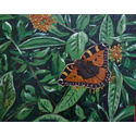 Red admiral;20×16 inches;oils on canvas;for sale.