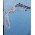 Swan in flight; oil on Canvas; 51x41cm..